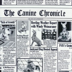 Baumwollstoff Timeless Treasure Newspaper Hunde K9 Chronicles